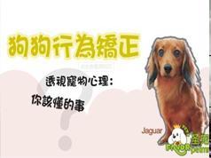 狗狗基本训练技巧之纠正不良行为视频教程(20节课 家狗乖狗狗)