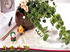 优秀花艺作品赏析视频集锦(13集)